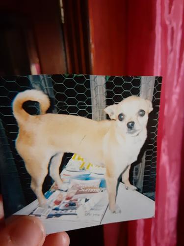 Lost Female Dog last seen Near Forest Glen Rd, Va Beach, 23452, Virginia Beach, VA 23452
