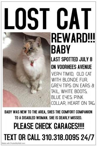 Lost Female Cat last seen Voorhees between Phelan and Perkins, Redondo Beach, CA 90278