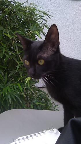 Lost Female Cat last seen topanga cyn / saticoy, Los Angeles, CA 91304