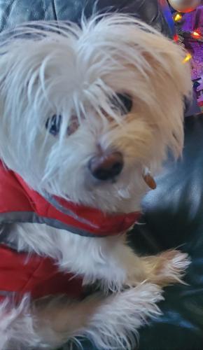 Lost Female Dog last seen Goodwin Road , Durham, NC 27712