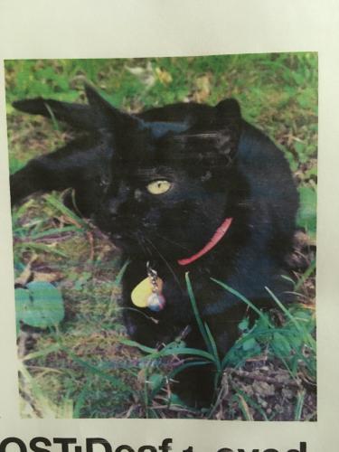 Lost Female Cat last seen Morehouse Rd., N 250 W, Taft Rd., 500 N, West Lafayette, IN 47906