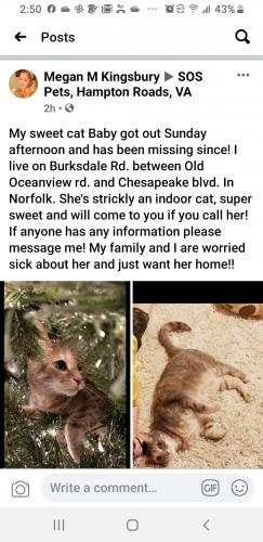 Lost Female Cat last seen Burksdale rd  in between Old Oceanview rd and Chesapeake  blvd , Norfolk, VA 23505