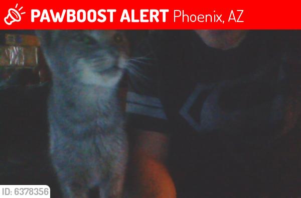 Lost Female Cat last seen 18th St and Oak, Phoenix, AZ 85006