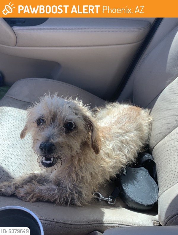 Found/Stray Female Dog last seen 16th St & University , Phoenix, AZ 85040