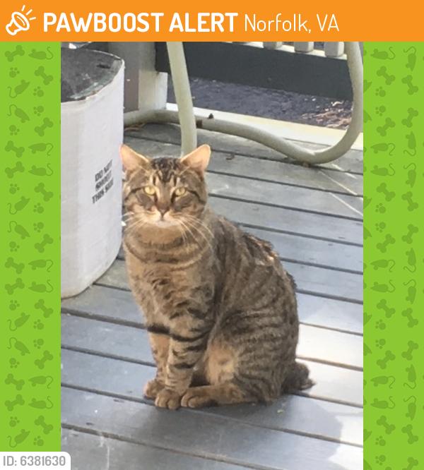 Found/Stray Male Cat last seen Military HWY Northampton blvd, Norfolk, VA 23502