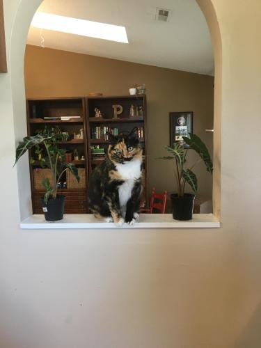 Lost Female Cat last seen Princess Anne/Lynnhaven Intersection, Virginia Beach, VA 23453