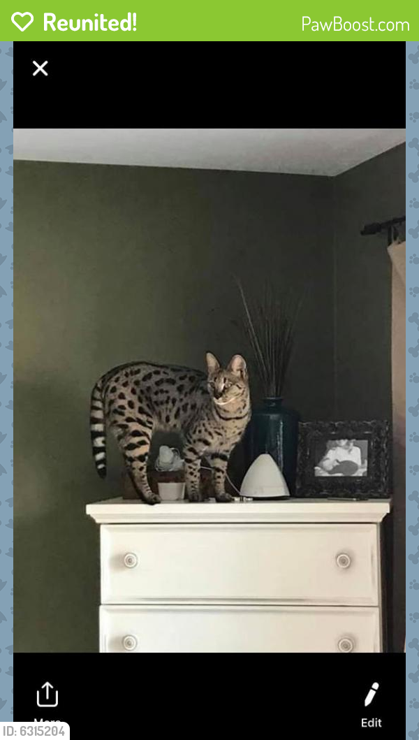 Reunited Female Cat last seen Near North and 1900 West, Ogden, UT 84404