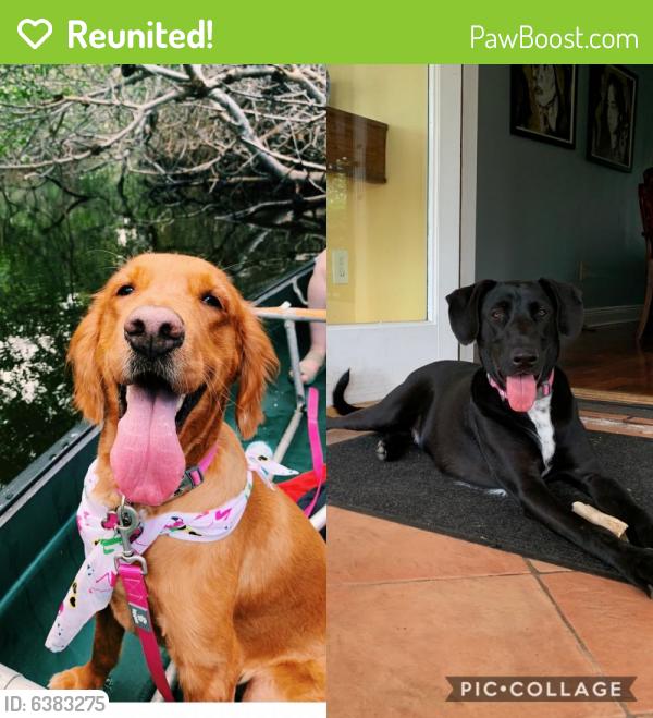 Reunited Unknown Dog last seen Gloria Floyd Elementary, 136th Street, 117 Avenue , Miami, FL 33176