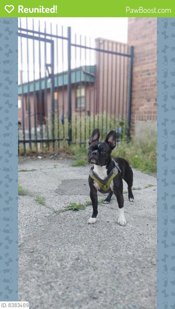 Reunited Male Dog last seen 34th & regal, Spokane, WA 99223