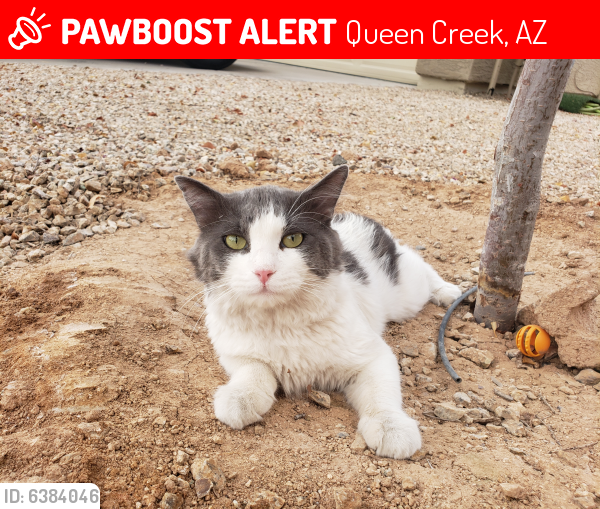 Lost Unknown Cat last seen Hunt Highway and Mountain Vista Road, Queen Creek, AZ 85142