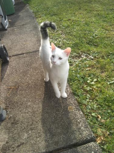 Lost Male Cat last seen Santee Mill road Bethlehem, Bethlehem, PA 18020