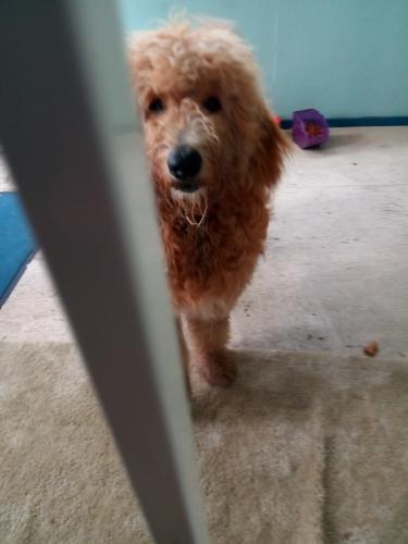 Found/Stray Female Dog last seen Ballentine blvd, Norfolk, VA 23504
