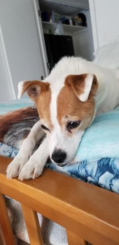 Lost Male Dog last seen Wickiup, Apache Junction, AZ 85119