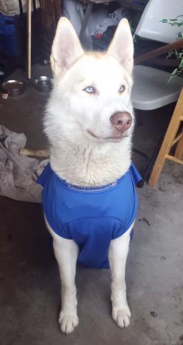 Lost Male Dog last seen Magnolia Ave. btwn Cerritos & Katella, Anaheim, CA 92804