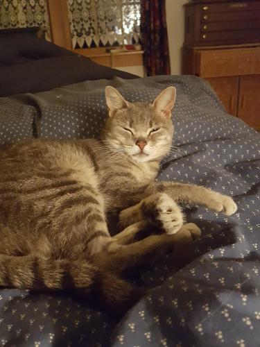 Lost Female Cat last seen Halfway house Rd, Broadway, NJ, Washington, NJ 07882