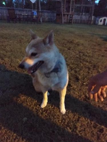 Found/Stray Female Dog last seen Muddy Creek/ Gumbridge, Virginia Beach, VA 23457