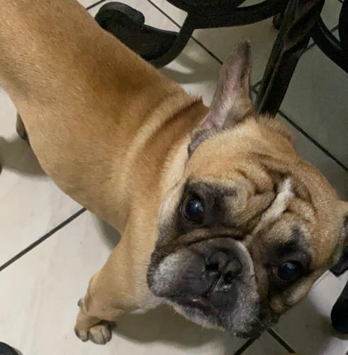 Lost Male Dog last seen Palmetto Hospital , Hialeah, FL 33016