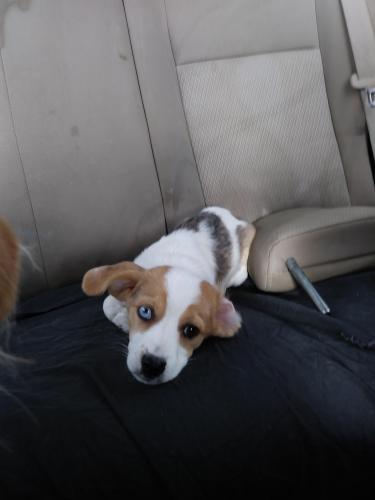 Lost Male Dog last seen Near sw 38th st Miami, FL 33155, Miami, FL 33155