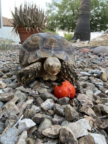Found/Stray Unknown Reptile last seen Lindsay & Mckellips , Mesa, AZ 85213