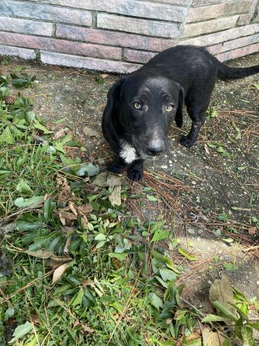 Found/Stray Male Dog last seen Tiller Lane, Chesapeake, VA 23321