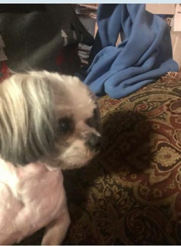 Lost Female Dog last seen S.W. 37th between May and Independence Ave., Oklahoma City, OK 73119