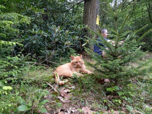 Lost Male Cat last seen Deppners, Tunkhannock Township, PA 18624