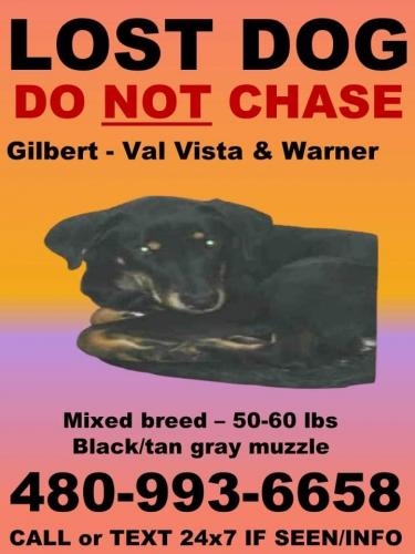 Lost Male Dog last seen Val Vista and Warner- Target parking lot, Maricopa County, AZ 85297
