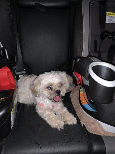 Found/Stray Male Dog last seen Arrowhead and Ray, Chandler, AZ 85226