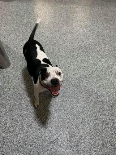 Found/Stray Male Dog last seen mcdowell & greenfield, Mesa, AZ 85215