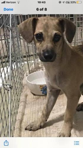 Found/Stray Male Dog last seen Alma School Rd & Main St, Mesa, AZ, Mesa, AZ 85201