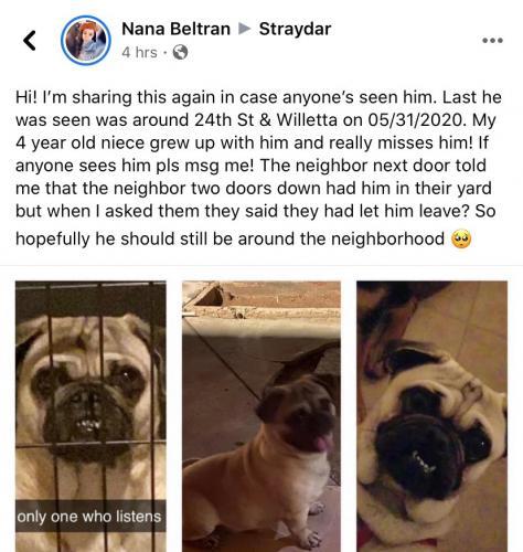 Lost Male Dog last seen McDowell and 24th st, Phoenix, AZ 85008