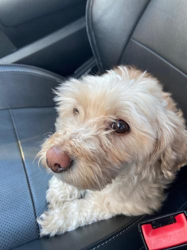Found/Stray Female Dog last seen Near E. Brown Road Mesa AZ, Mesa, AZ 85205