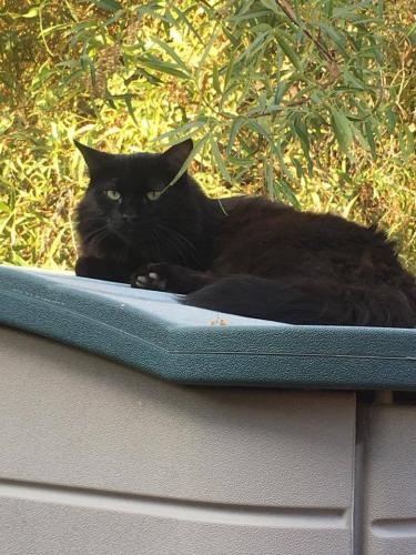 Found/Stray Unknown Cat last seen Area of Mountain Park Ranch / Esperanza / Sun Ray Park (Ahwatukee)., Phoenix, AZ 85044
