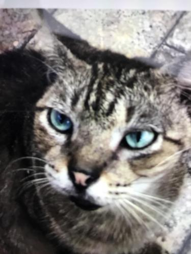 Found/Stray Male Cat last seen Stirling Rd behind Burger King, Dania Beach, FL 33004
