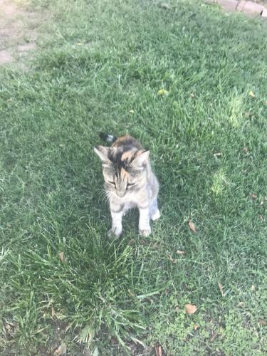 Found/Stray Unknown Cat last seen Southern + McClintock, Tempe, AZ 85282