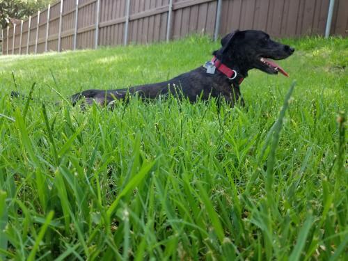 Lost Female Dog last seen Katie Jackson Park, 4900 Haverwood Ln, Dallas, TX 75287, Dallas, TX 75287