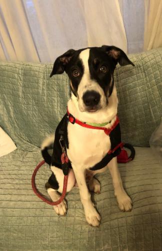 Lost Male Dog last seen North Federal Highway & NE 26th Street, Fort Lauderdale, FL 33306