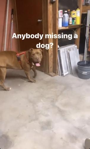 Found/Stray Male Dog last seen 45th Ave & Myrtle , Glendale, AZ 85301