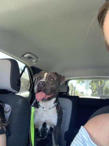 Found/Stray Male Dog last seen E Kay Street , Compton, CA 90221