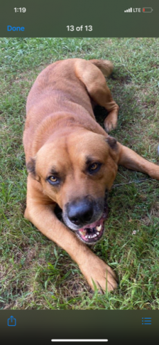 Lost Male Dog last seen Norview Ave & Military Hwy, Norfolk, VA 23513