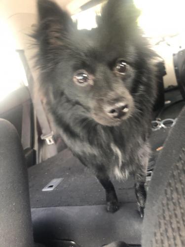 Found/Stray Female Dog last seen Larry Ave Virginia Beach VA 23462, Virginia Beach, VA 23462