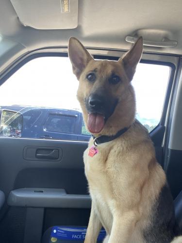 Lost Female Dog last seen near East Durham, Durham, NC 27703