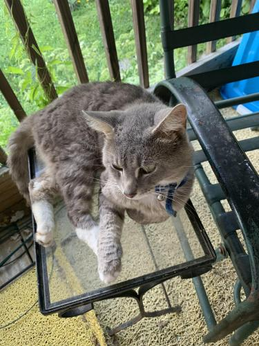 Lost Male Cat last seen Upland,Rd, Parkridge Acres, OH 45506