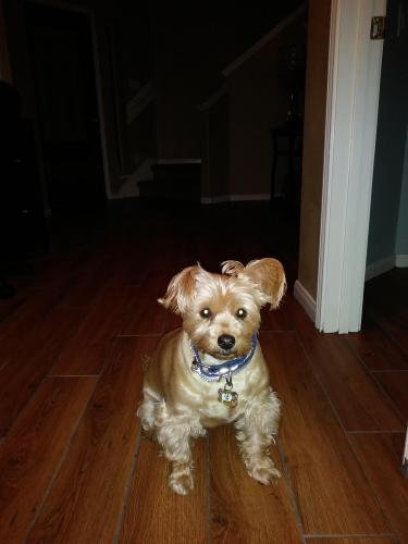 Lost Male Dog last seen Imperial Valley & Richey Rd, Houston, TX 77090