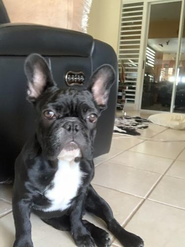 Lost Male Dog last seen Near South Le Doux Road, Beverly Hills, CA 90211, Beverly Hills, CA 90211