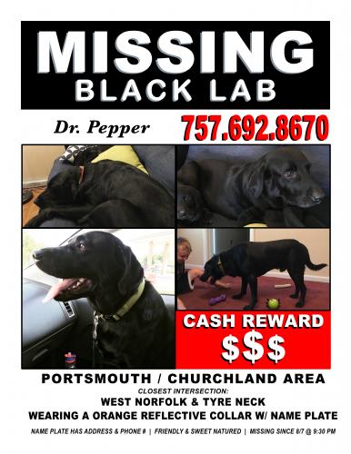 Lost Male Dog last seen West Norfolk Road, Portsmouth, VA 23703