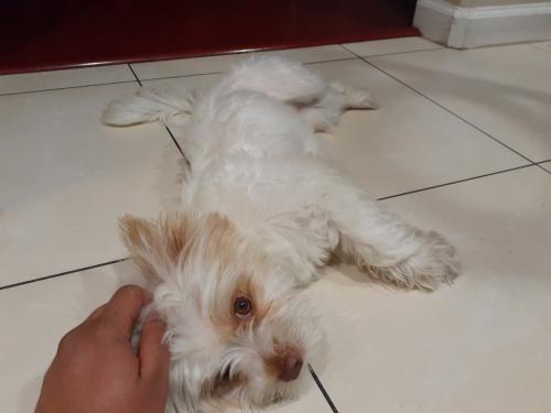 Lost Female Dog last seen 147th & Condon Ave, Lawndale, CA 90260
