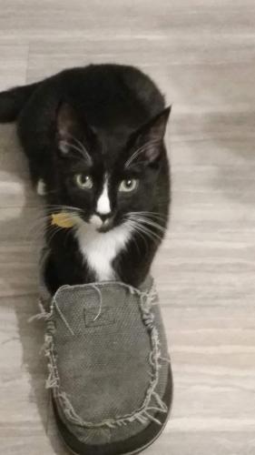 Lost Male Cat last seen Lynn Shores neighboorhood, Portsmouth, VA 23707