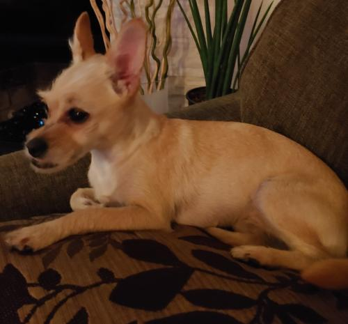 Found/Stray Female Dog last seen Imperial, Hawthorne, CA 90250