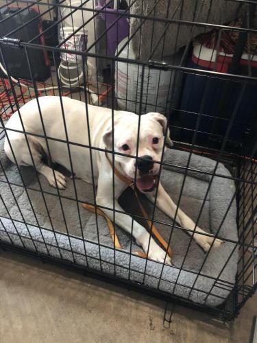 Found/Stray Female Dog last seen Near nw 209th terr Miami Gardens, FL 33056, Miami Gardens, FL 33056